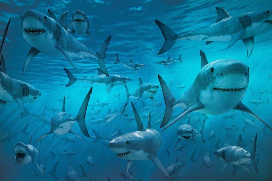 Акуды в бассейне